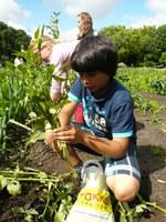 wekelijks tuinieren