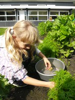 wekelijks tuinieren in de schooltuin