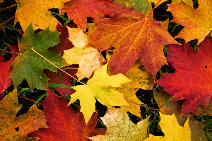 Autumn-Leaves-Leaf-Raking