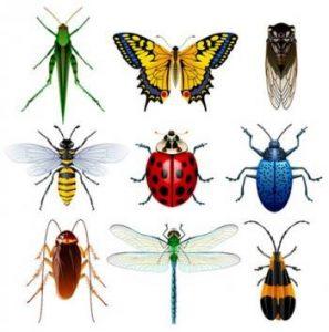 insecten_01-297×300
