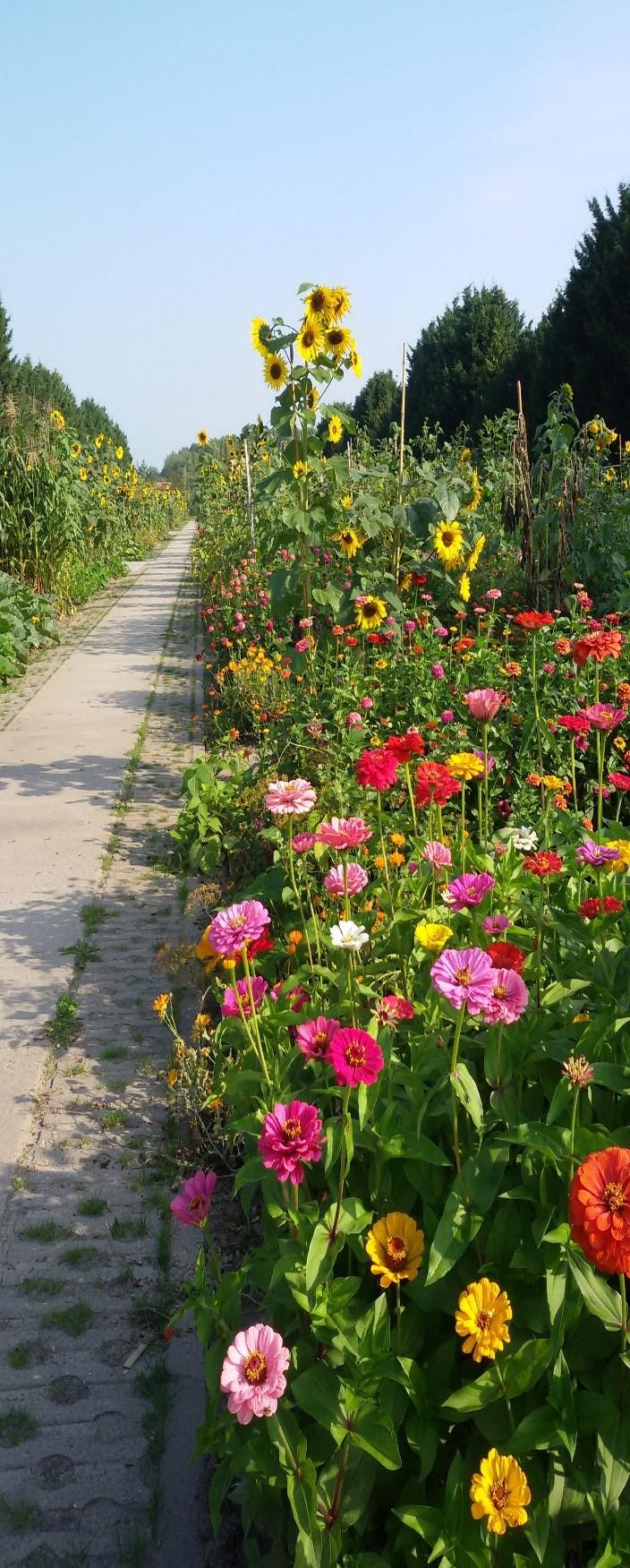 Westpark-bloemenfoto